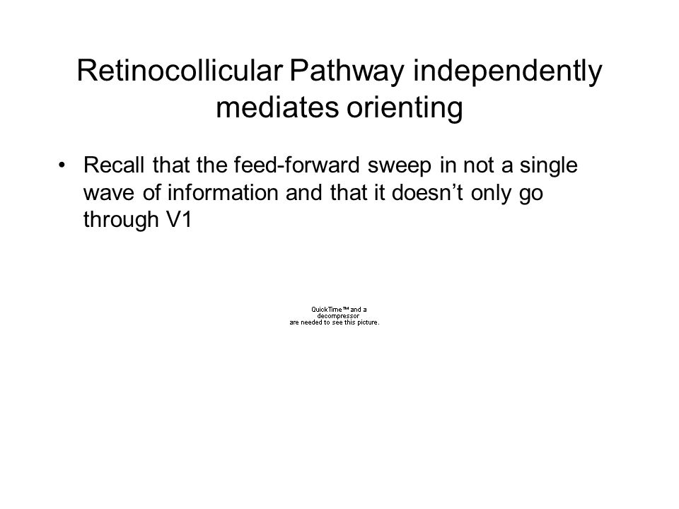 Retinocollicular Pathway independently mediates orienting Recall that the feed-forward sweep in not a single wave of information and that it doesn't only go through V1