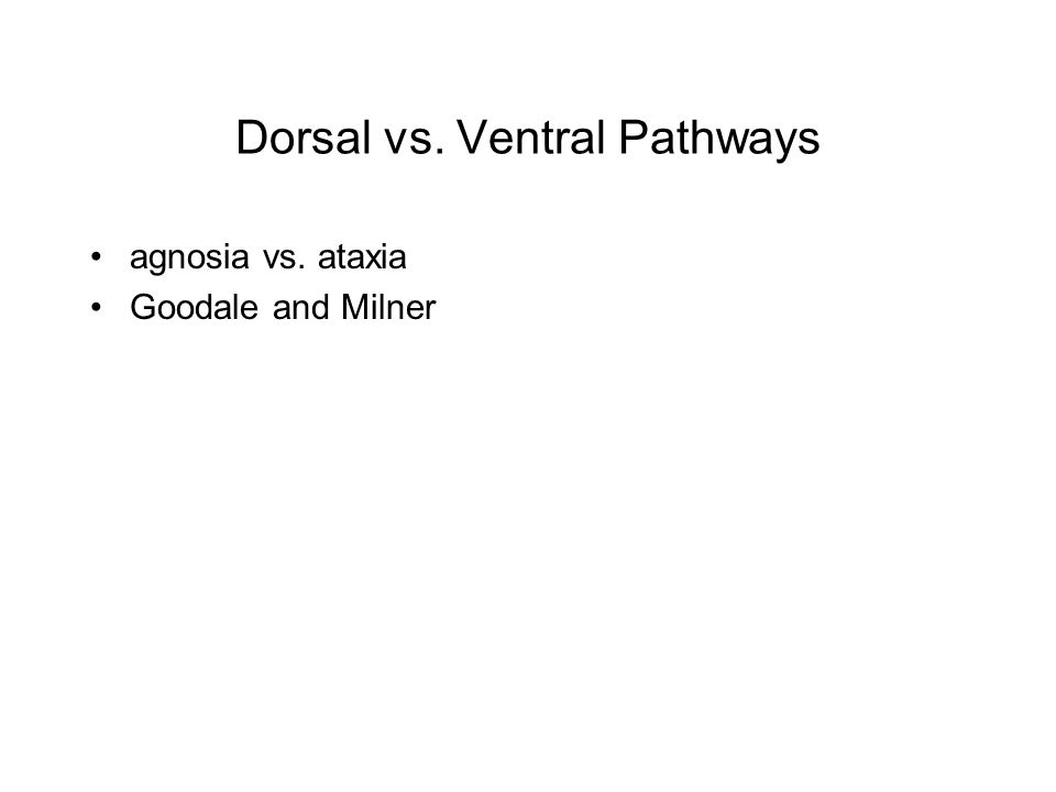 Dorsal vs. Ventral Pathways agnosia vs. ataxia Goodale and Milner