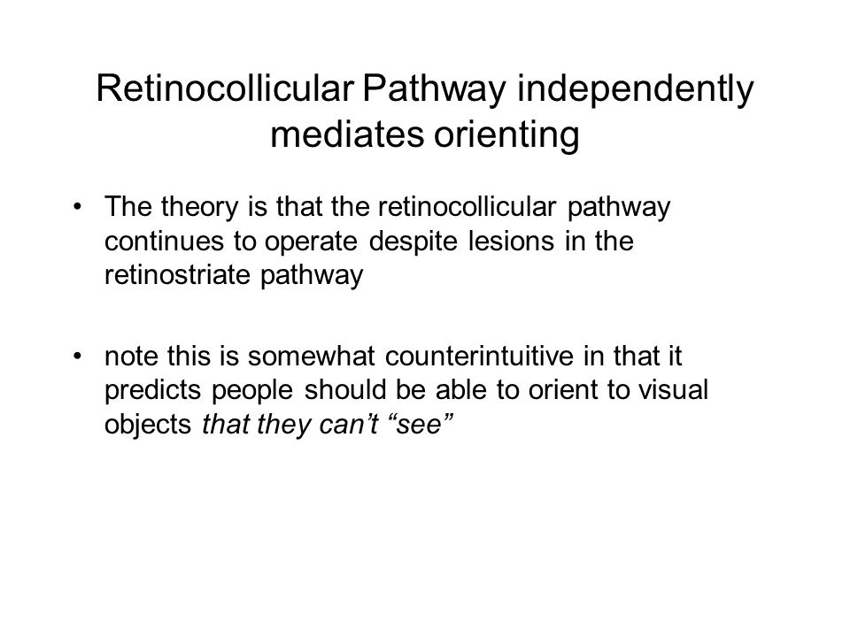 Retinocollicular Pathway independently mediates orienting The theory is that the retinocollicular pathway continues to operate despite lesions in the retinostriate pathway note this is somewhat counterintuitive in that it predicts people should be able to orient to visual objects that they can't see