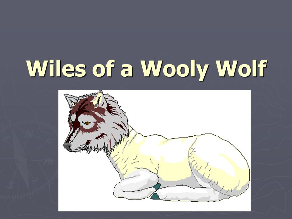 Wiles of a Wooly Wolf