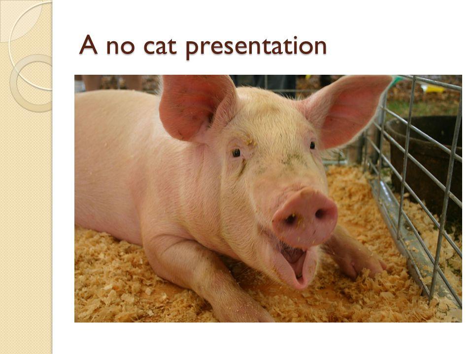 A no cat presentation