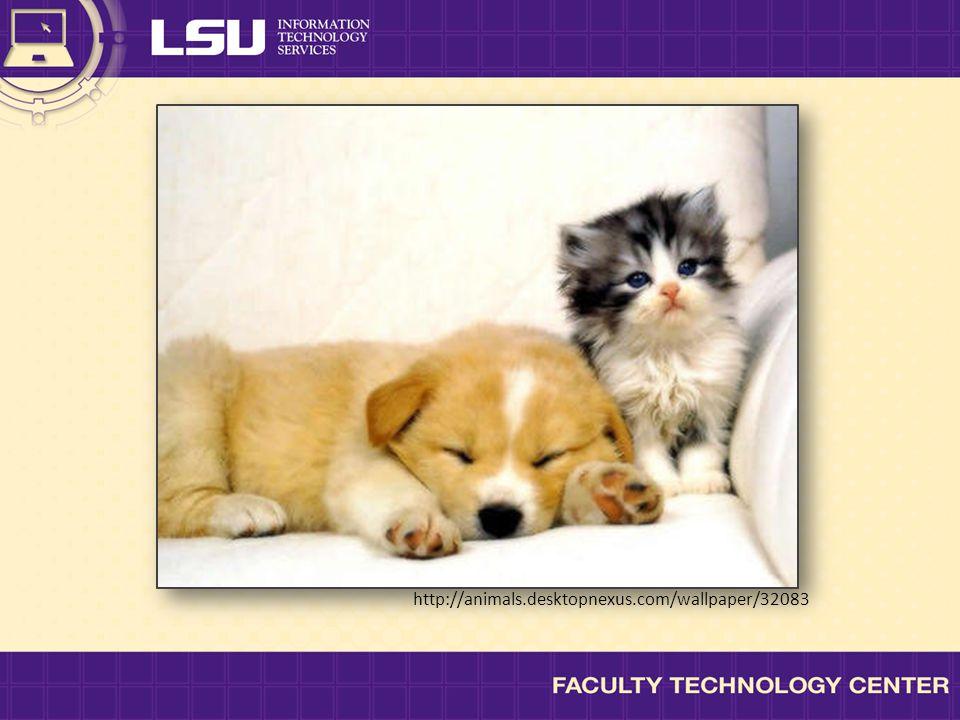 http://animals.desktopnexus.com/wallpaper/32083