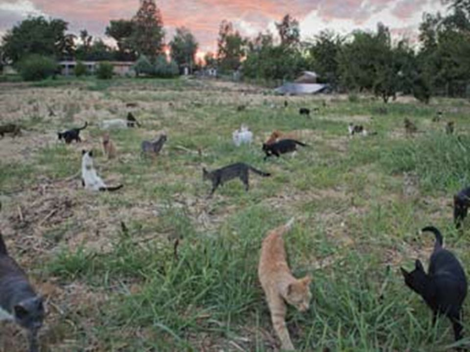 What can happen if we feed one stray cat