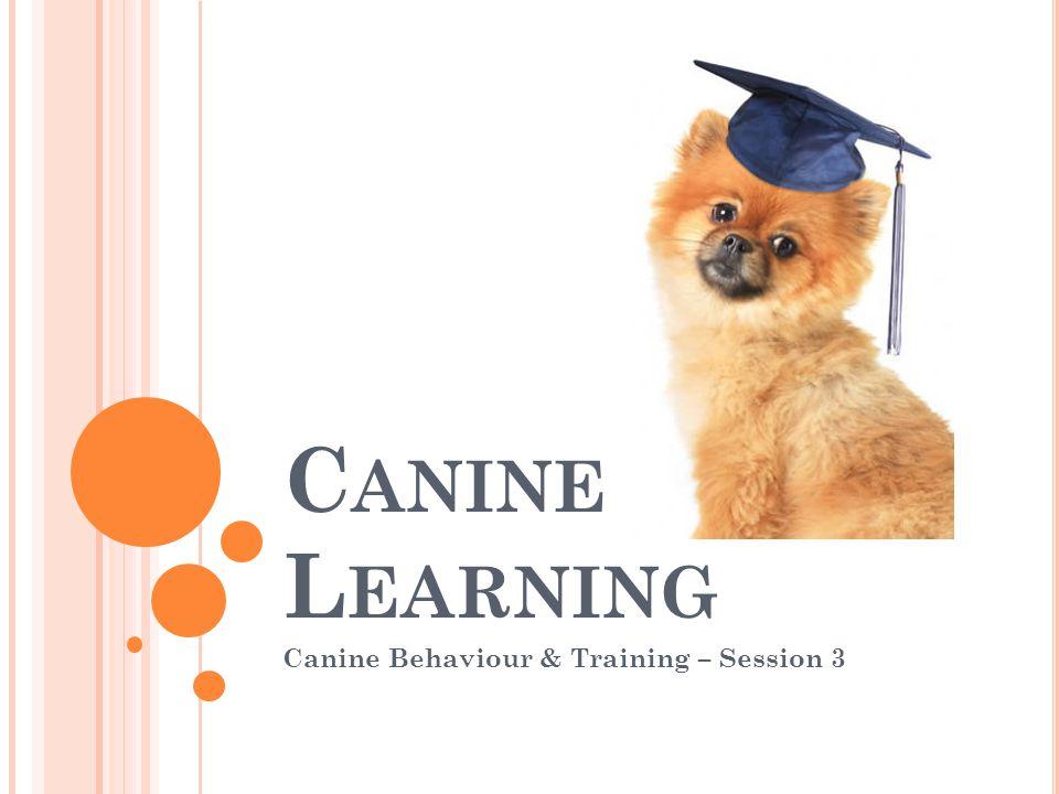 C ANINE L EARNING Canine Behaviour & Training – Session 3