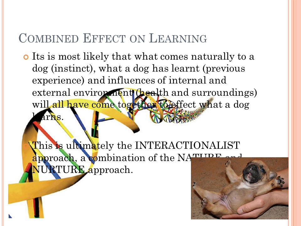 C OMBINED E FFECT ON L EARNING Its is most likely that what comes naturally to a dog (instinct), what a dog has learnt (previous experience) and influ