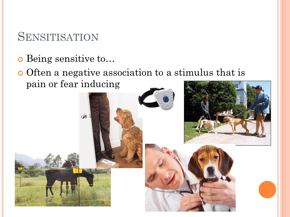 S ENSITISATION Being sensitive to… Often a negative association to a stimulus that is pain or fear inducing