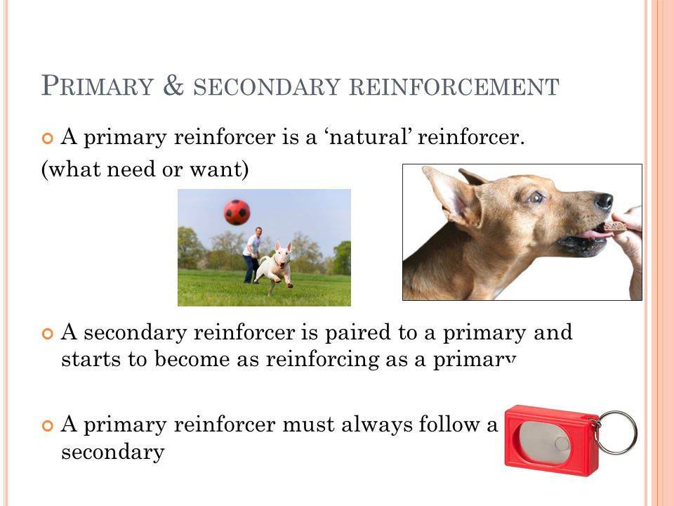 P RIMARY & SECONDARY REINFORCEMENT A primary reinforcer is a 'natural' reinforcer. (what need or want) A secondary reinforcer is paired to a primary a