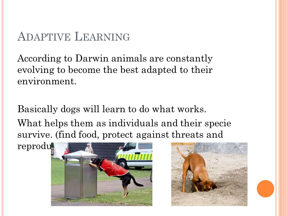 A DAPTIVE L EARNING According to Darwin animals are constantly evolving to become the best adapted to their environment.