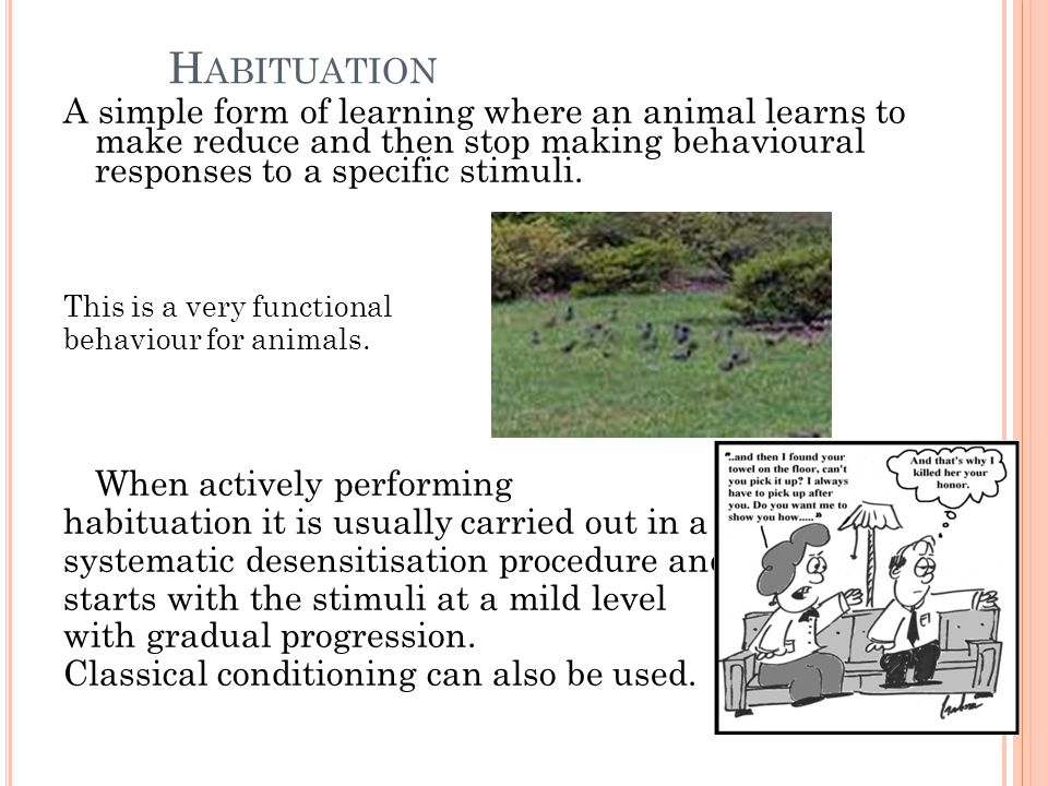 H ABITUATION A simple form of learning where an animal learns to make reduce and then stop making behavioural responses to a specific stimuli.