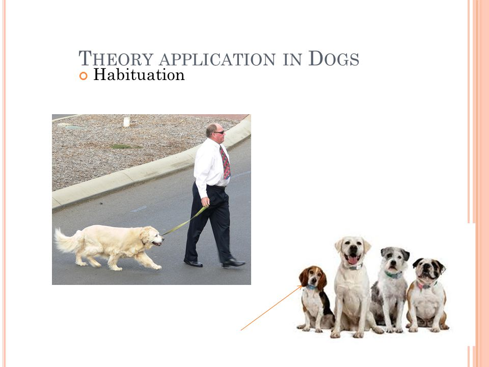 T HEORY APPLICATION IN D OGS Habituation