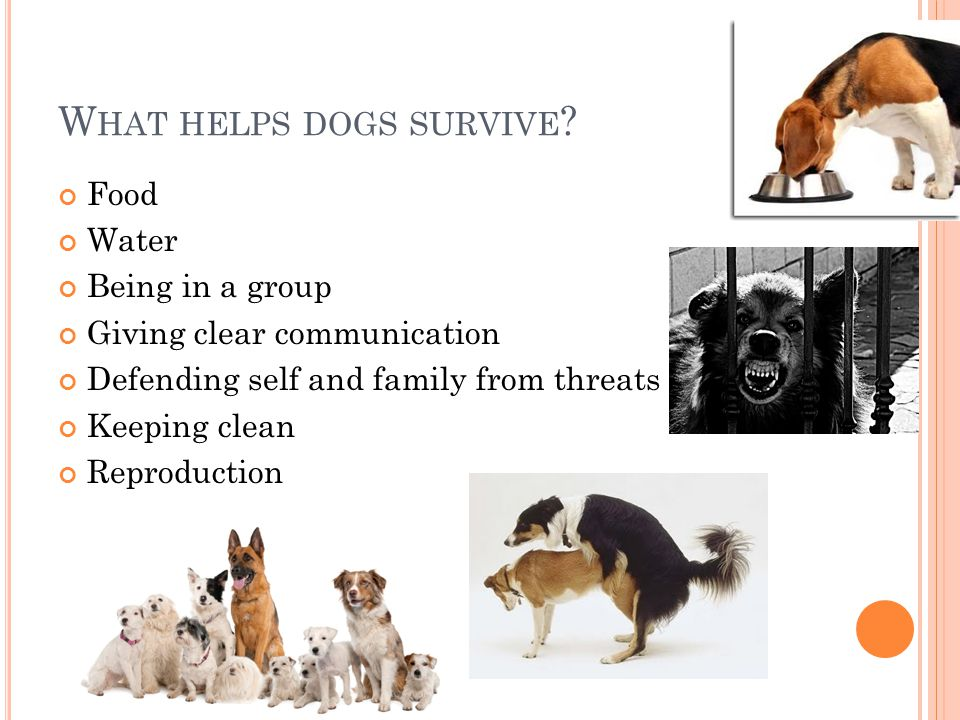 W HAT HELPS DOGS SURVIVE .