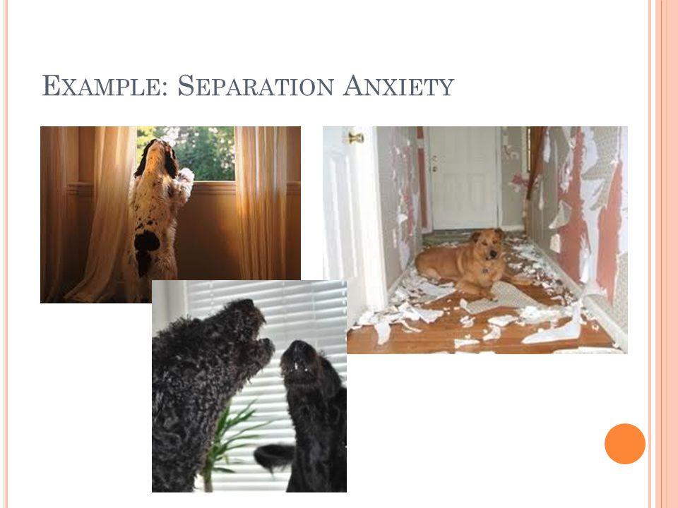 E XAMPLE : S EPARATION A NXIETY