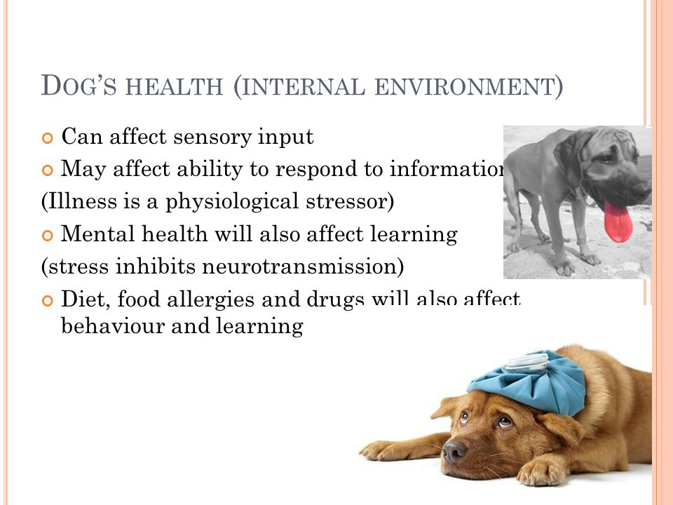 D OG ' S HEALTH ( INTERNAL ENVIRONMENT ) Can affect sensory input May affect ability to respond to information (Illness is a physiological stressor) Mental health will also affect learning (stress inhibits neurotransmission) Diet, food allergies and drugs will also affect behaviour and learning