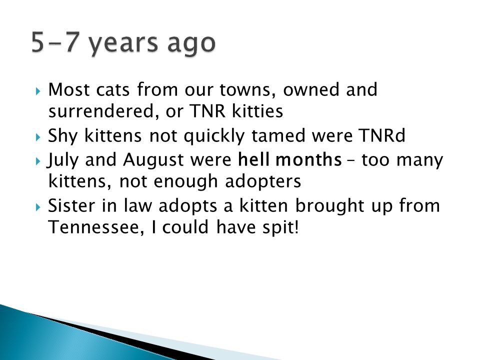  Most cats from our towns, owned and surrendered, or TNR kitties  Shy kittens not quickly tamed were TNRd  July and August were hell months – too many kittens, not enough adopters  Sister in law adopts a kitten brought up from Tennessee, I could have spit!