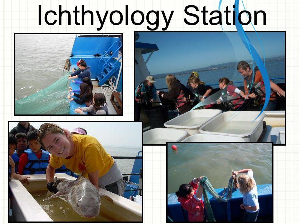 Ichthyology Station
