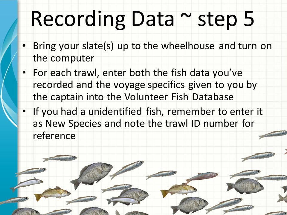 Recording Data ~ step 5 Bring your slate(s) up to the wheelhouse and turn on the computer For each trawl, enter both the fish data you've recorded and the voyage specifics given to you by the captain into the Volunteer Fish Database If you had a unidentified fish, remember to enter it as New Species and note the trawl ID number for reference