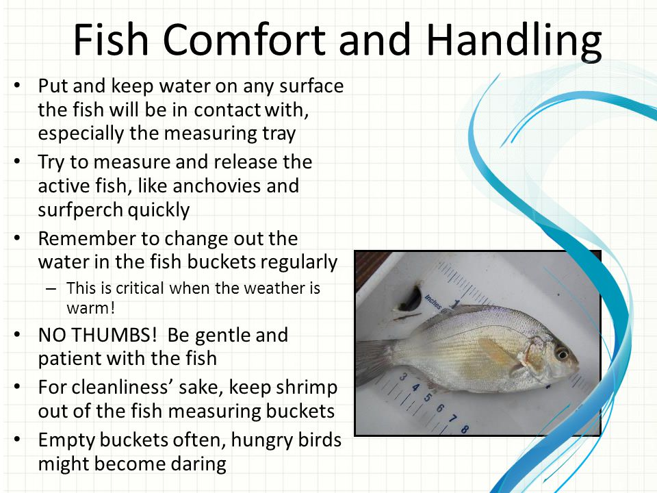 Fish Comfort and Handling Put and keep water on any surface the fish will be in contact with, especially the measuring tray Try to measure and release