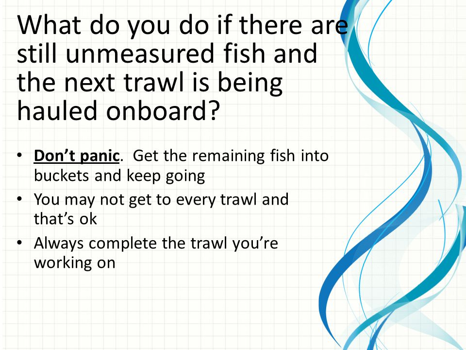 What do you do if there are still unmeasured fish and the next trawl is being hauled onboard.