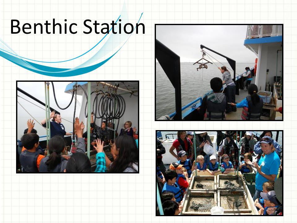 Benthic Station
