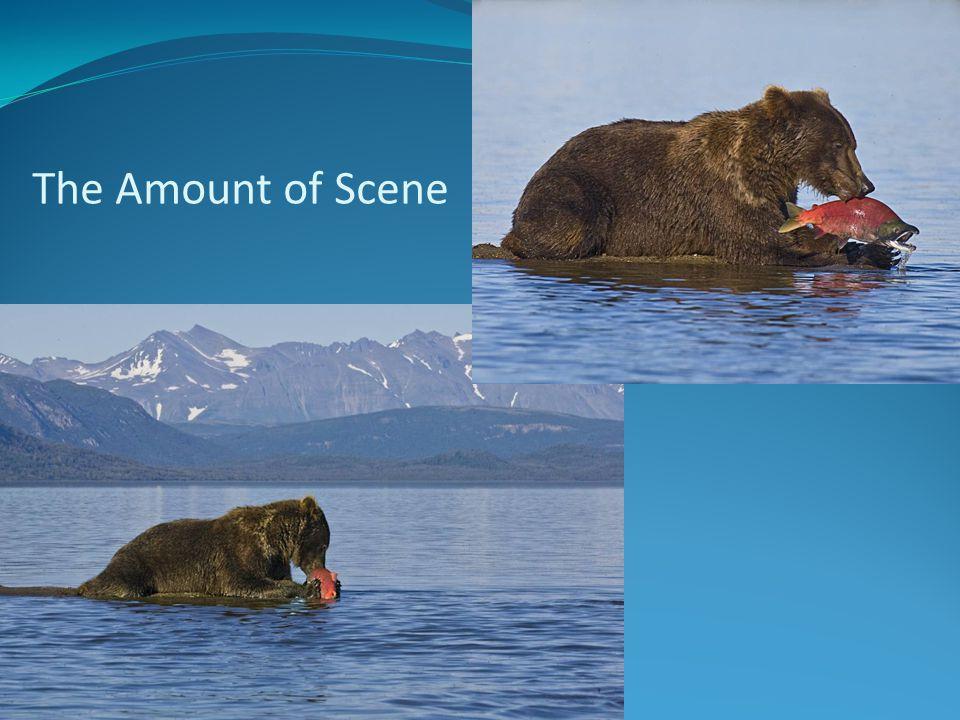 The Amount of Scene