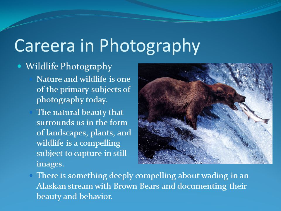 Careera in Photography Wildlife Photography Nature and wildlife is one of the primary subjects of photography today. The natural beauty that surrounds