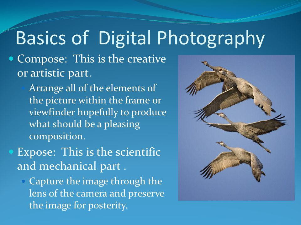 Basics of Digital Photography Compose: This is the creative or artistic part. Arrange all of the elements of the picture within the frame or viewfinde
