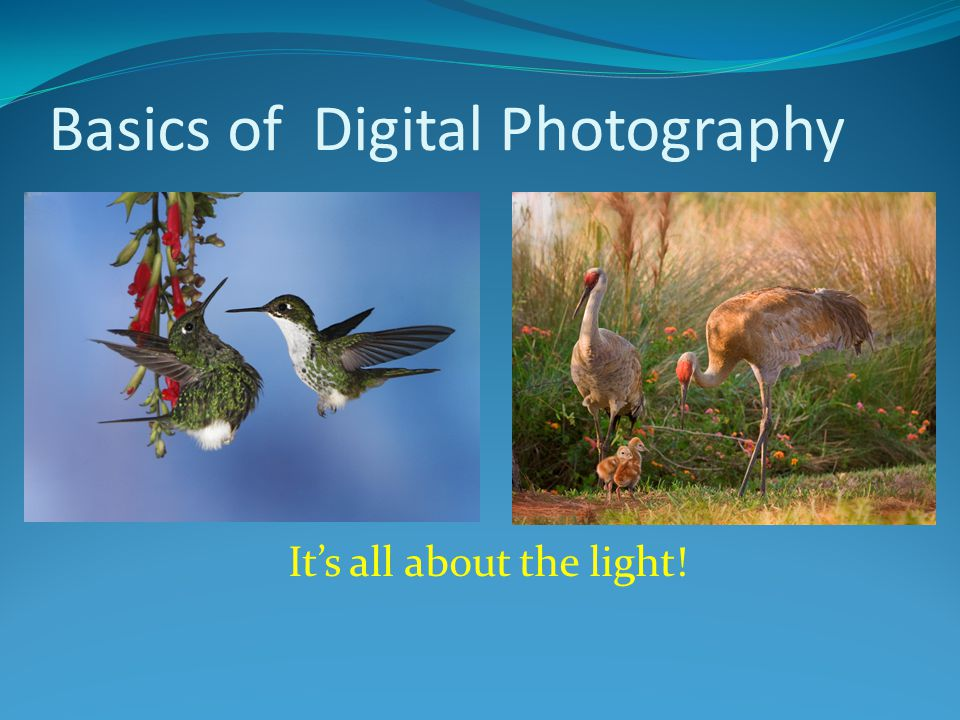 It's all about the light! Basics of Digital Photography