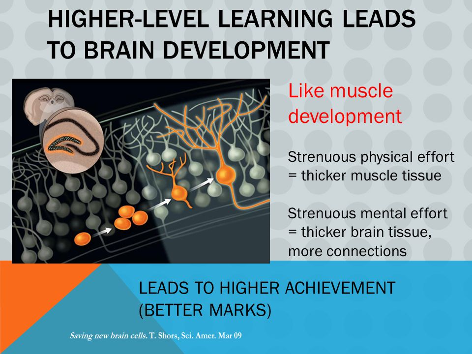 HIGHER-LEVEL LEARNING LEADS TO BRAIN DEVELOPMENT Like muscle development Strenuous physical effort = thicker muscle tissue Strenuous mental effort = thicker brain tissue, more connections LEADS TO HIGHER ACHIEVEMENT (BETTER MARKS)