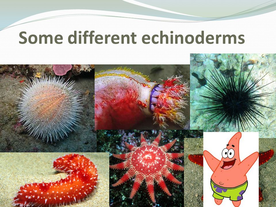 Some different echinoderms