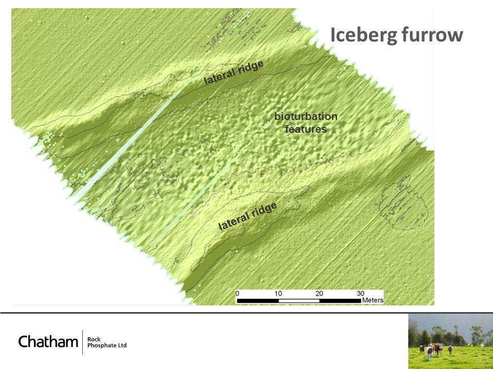 Iceberg furrow bioturbation features lateral ridge