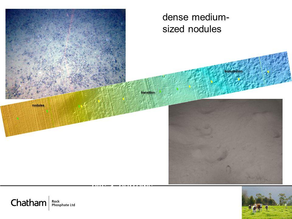 pits & burrows dense medium- sized nodules