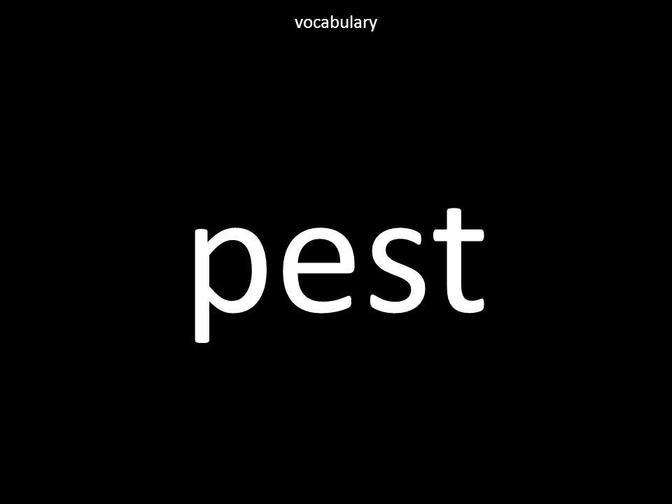pest vocabulary