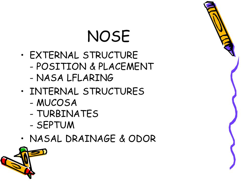 NOSE EXTERNAL STRUCTURE - POSITION & PLACEMENT - NASA LFLARING INTERNAL STRUCTURES - MUCOSA - TURBINATES - SEPTUM NASAL DRAINAGE & ODOR