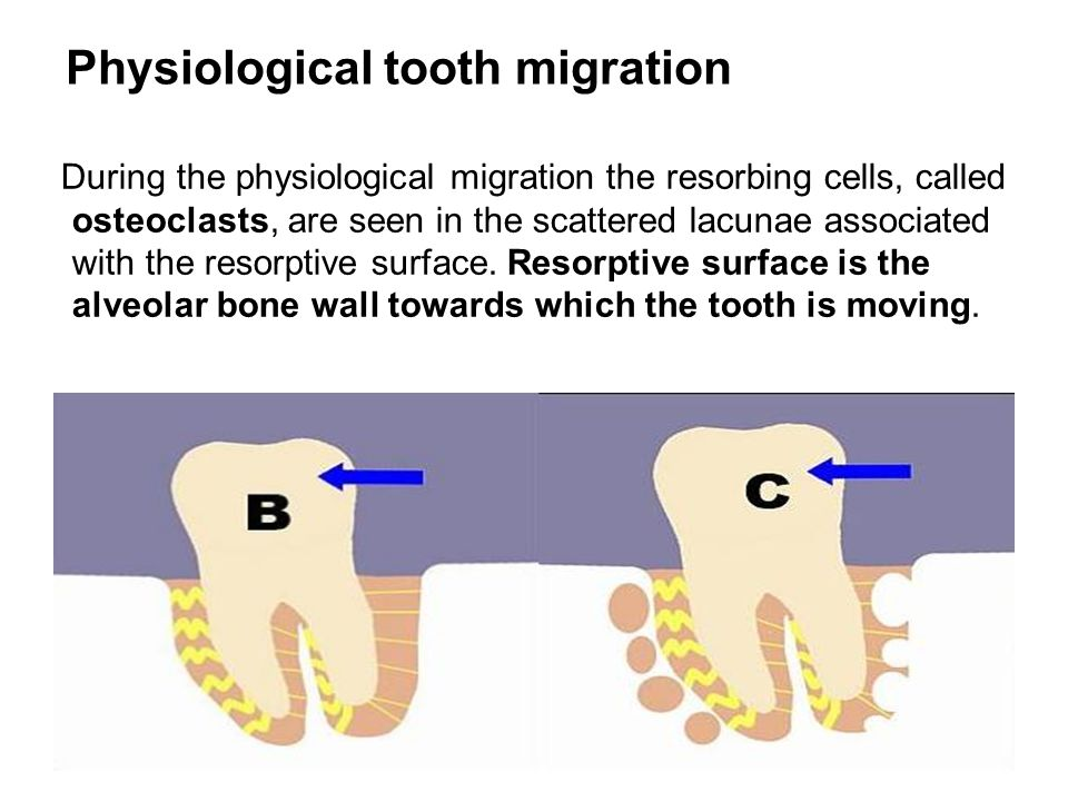 As regards control of tissue reactions many mechanisms have been considered responsible for the differentiation of cells incident upon the application of an orthodontic force.
