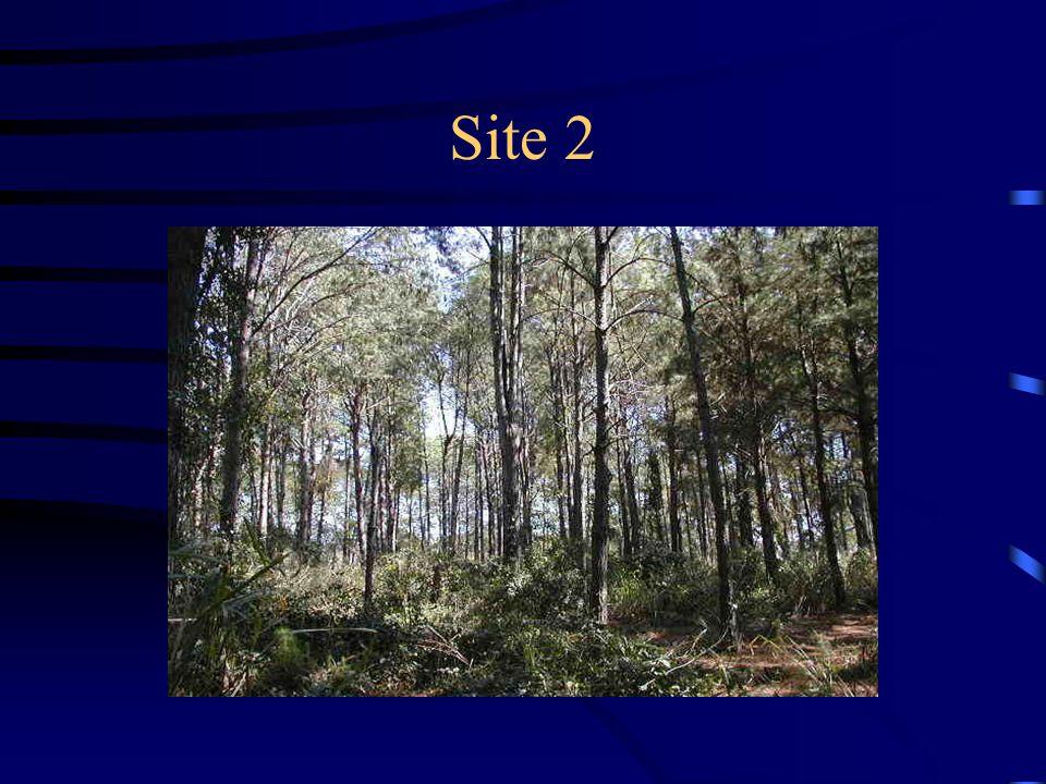 Site 2