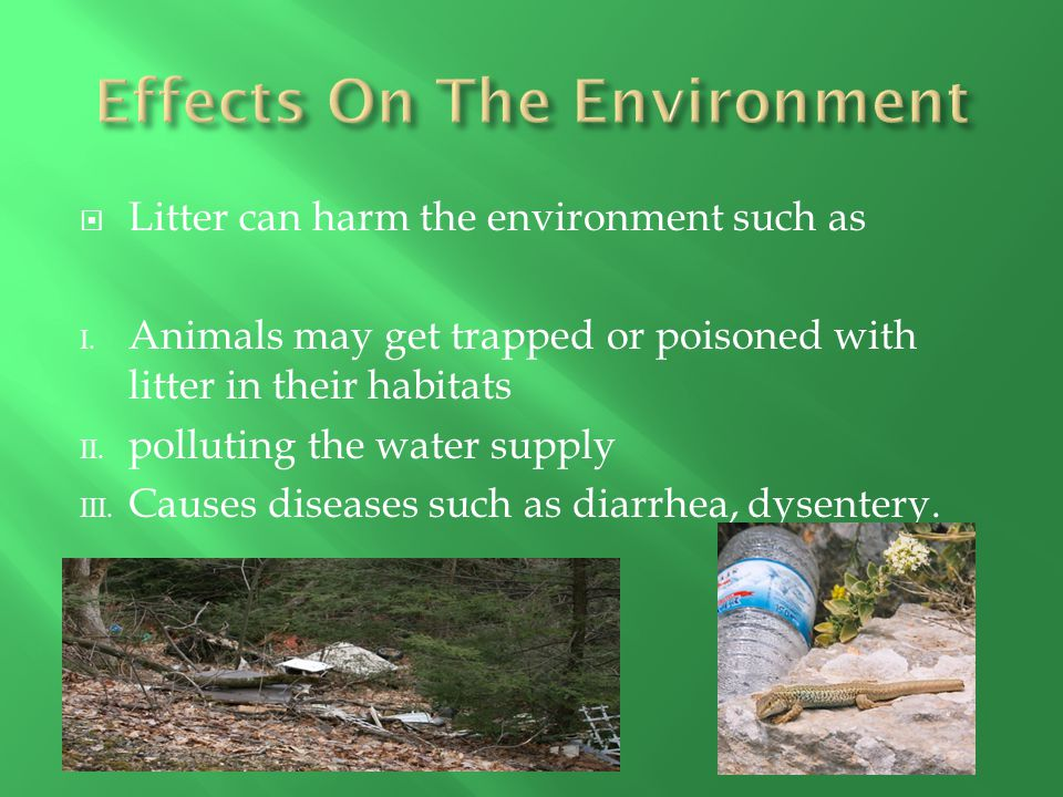  Litter can harm the environment such as I. Animals may get trapped or poisoned with litter in their habitats II. polluting the water supply III. Cau