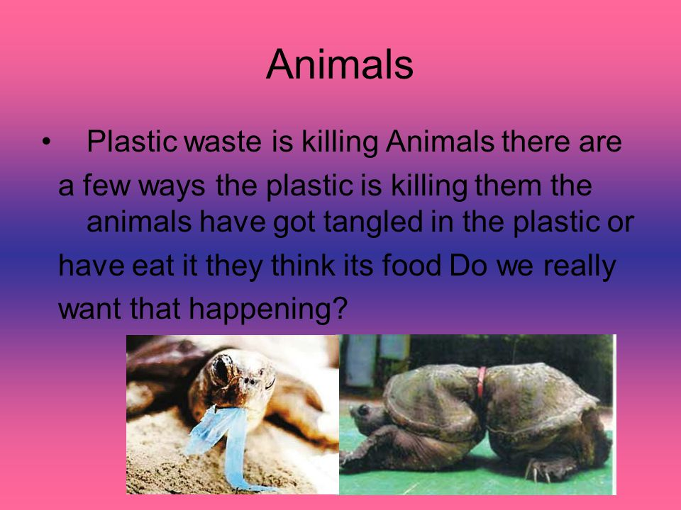 Animals Plastic waste is killing Animals there are a few ways the plastic is killing them the animals have got tangled in the plastic or have eat it t
