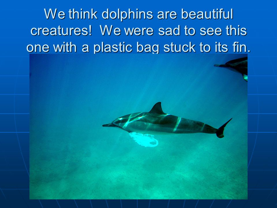 We think dolphins are beautiful creatures.