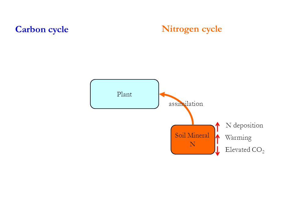 Carbon cycle Soil Mineral N Nitrogen cycle Plant assimilation Warming N deposition Elevated CO 2