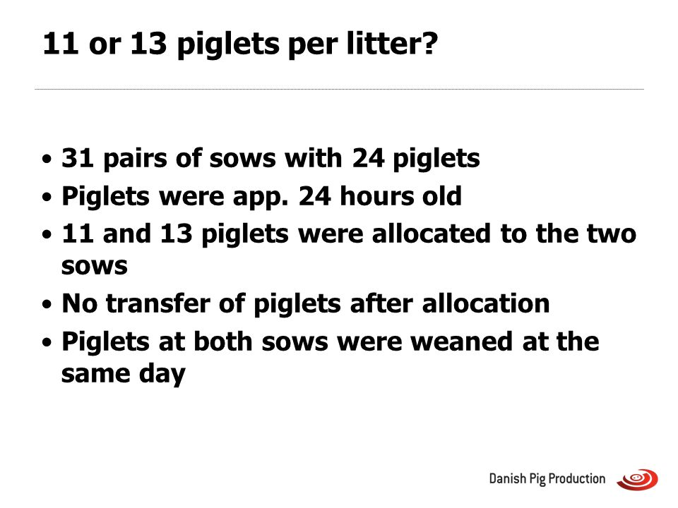 11 or 13 piglets per litter. 31 pairs of sows with 24 piglets Piglets were app.