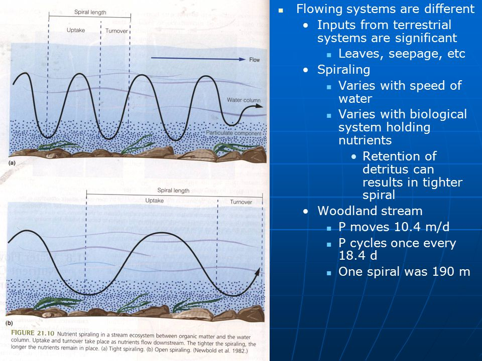 Flowing systems are different Inputs from terrestrial systems are significant Leaves, seepage, etc Spiraling Varies with speed of water Varies with bi