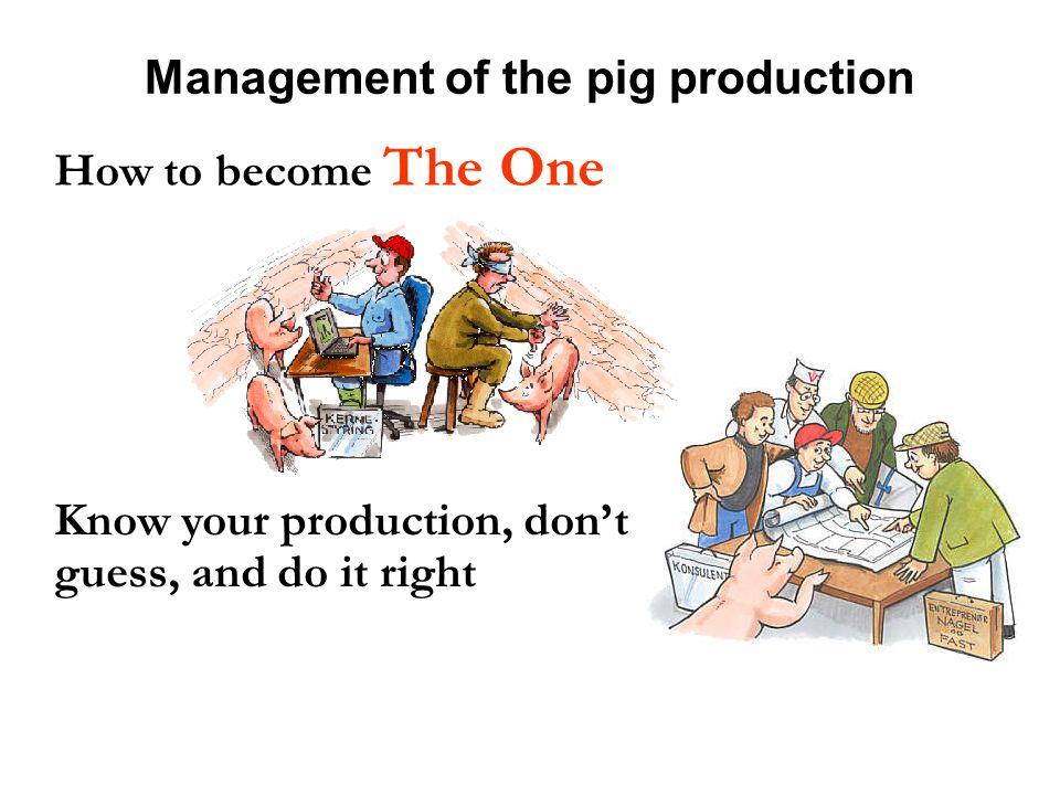 Management of the pig production How to become The One Know your production, don't guess, and do it right