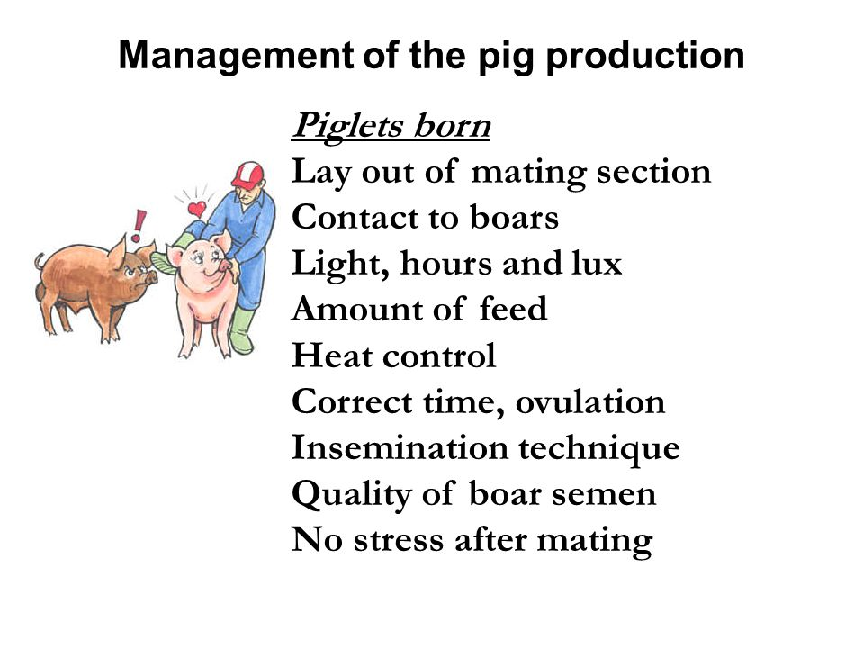 Management of the pig production Piglets born Lay out of mating section Contact to boars Light, hours and lux Amount of feed Heat control Correct time, ovulation Insemination technique Quality of boar semen No stress after mating