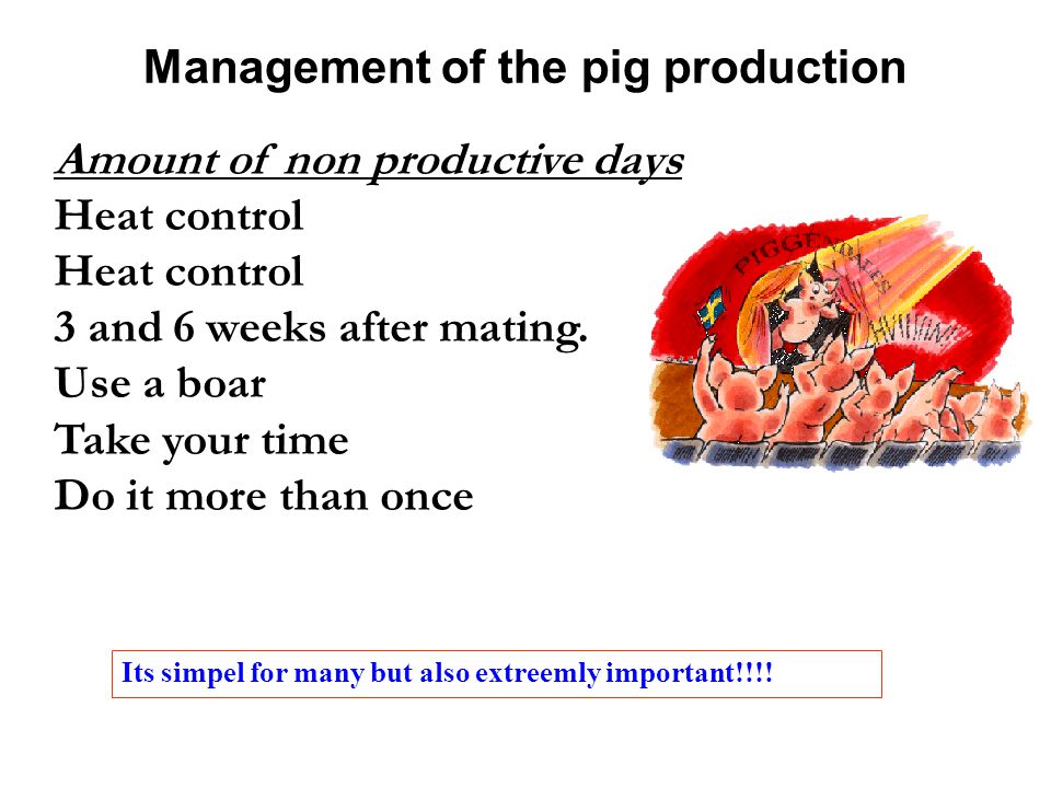 Management of the pig production Amount of non productive days Heat control 3 and 6 weeks after mating.