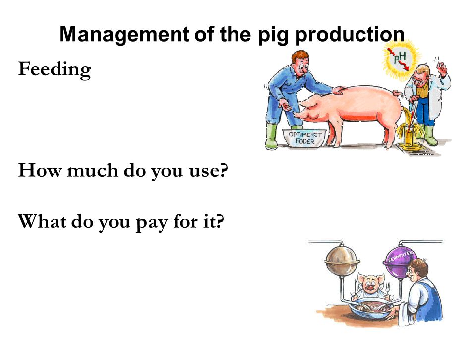 Management of the pig production Feeding How much do you use What do you pay for it