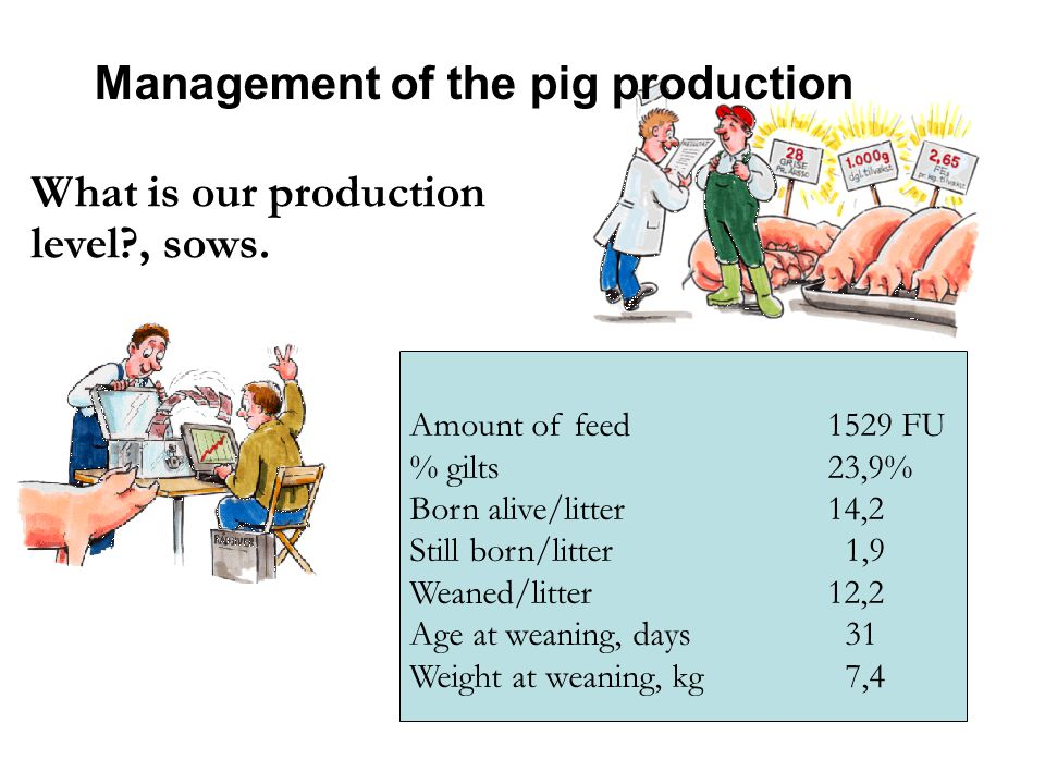 Management of the pig production What is our production level , sows.