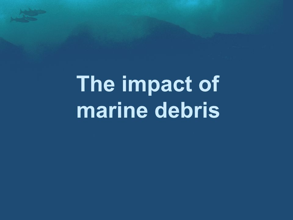 The impact of marine debris