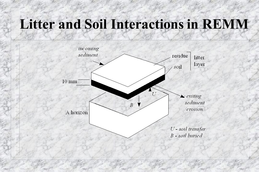 Litter and Soil Interactions in REMM