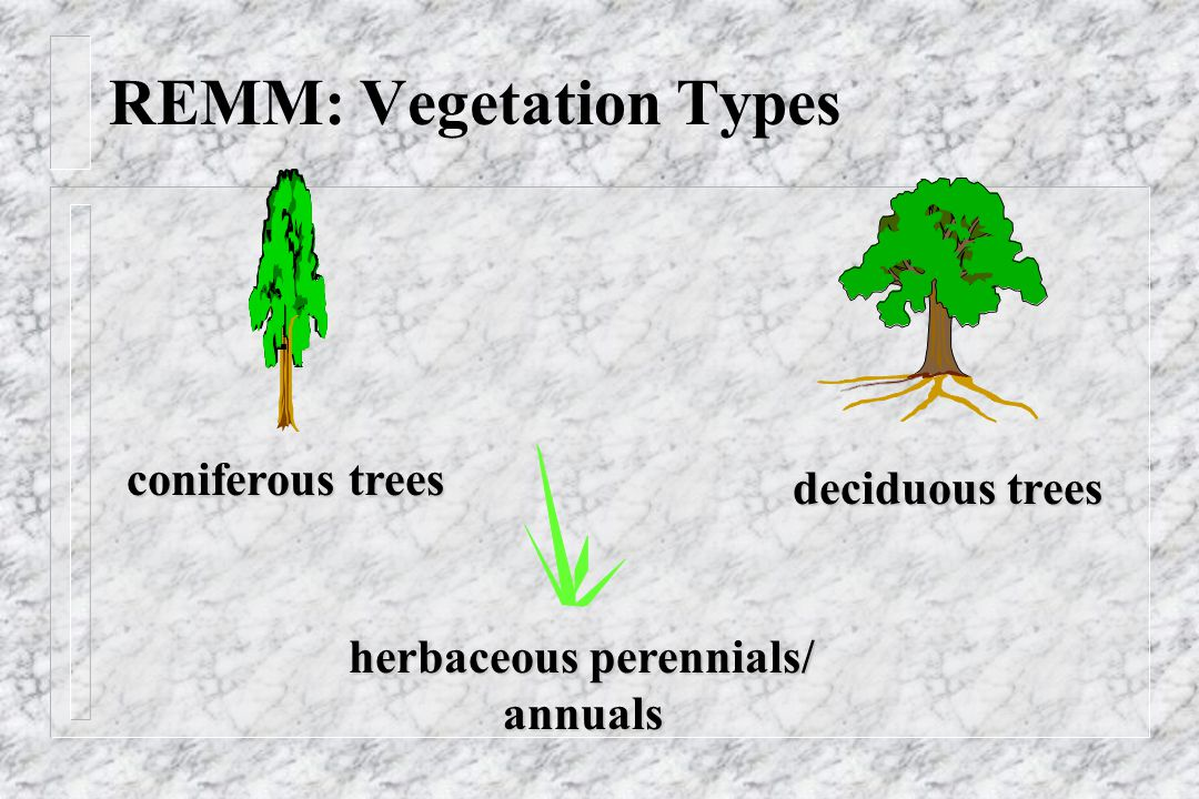 REMM: Vegetation Types coniferous trees deciduous trees herbaceous perennials/ annuals annuals
