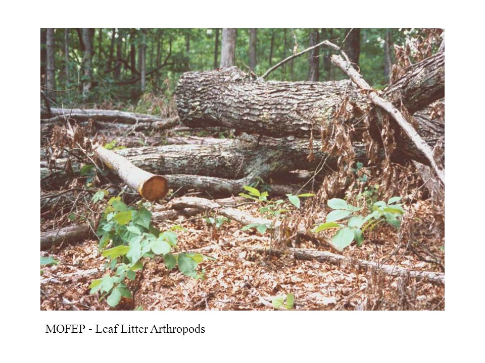 MOFEP - Leaf Litter Arthropods